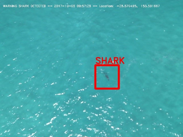 shark_detection_report_detail_1